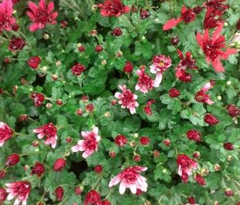 Herbst-5__2021-10-07-17.31.06